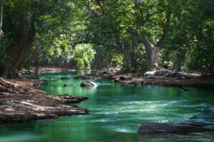 Une riviere passant dans la foret